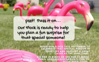 Book your Flamingo Flock today!